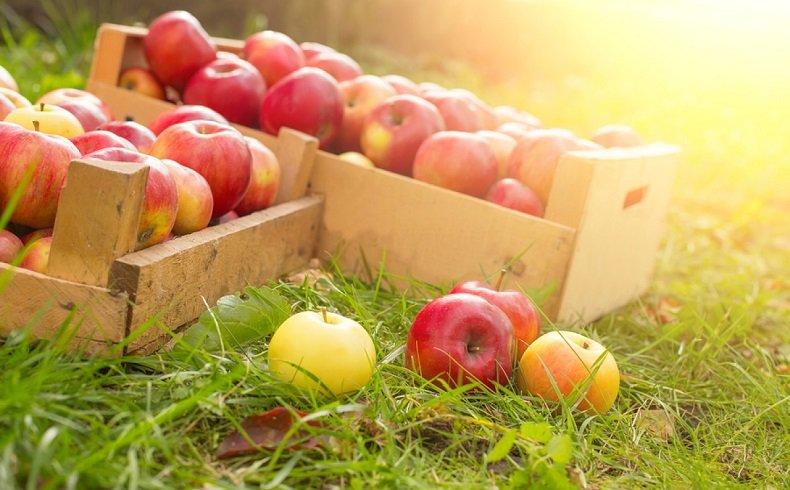 Fibres dans les pommes